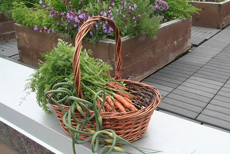 Careers Rooftop Garden Basket M