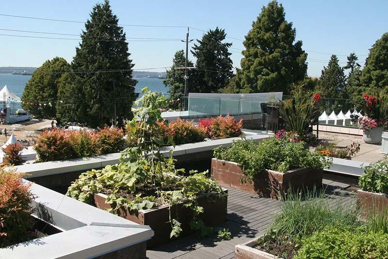 Careers Rooftop Garden Plants M